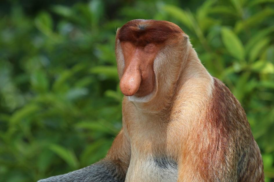 monkey-new.jpg