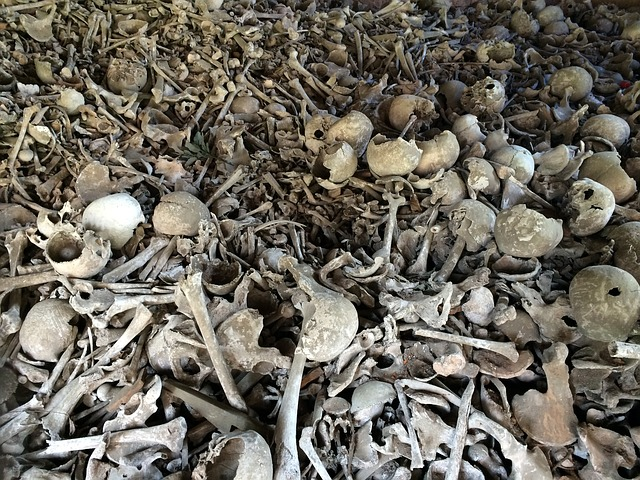 bone-664596_640.jpg