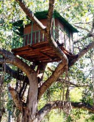 kerala_treehouse.jpg